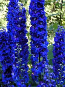 flori cataratoare pentru gradina