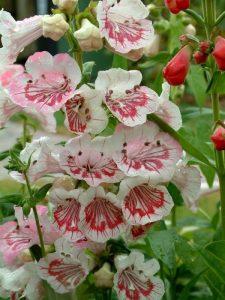 amenajare gradina cu flori colorate