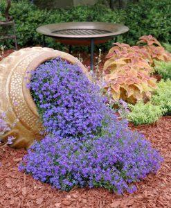 plante si decoratiuni de gradina