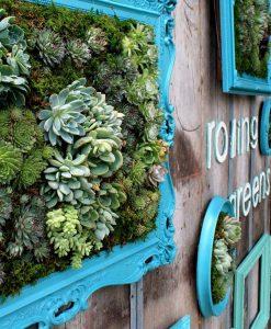 perete vegetal
