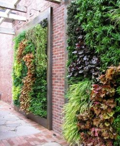 plante agatatoare gradina