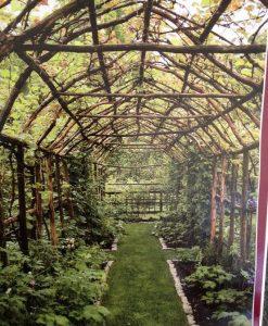 gradina vegetatie